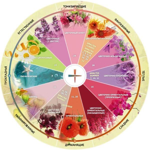 Картинки по запросу карта женских парфюмов